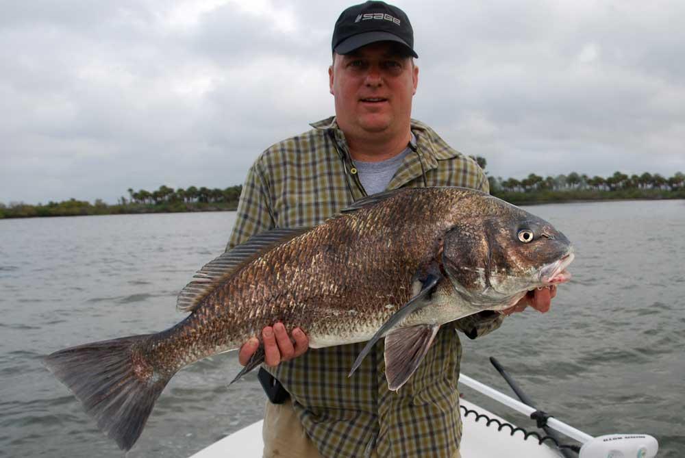 Black drum fishing charters photo gallery drum fishing for Fishing near orlando fl